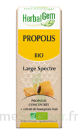 Herbalgem Propolis large spectre Solution buvable bio Fl cpte-gttes/15ml à Hendaye